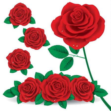 Red Rose Flower 矢量图像