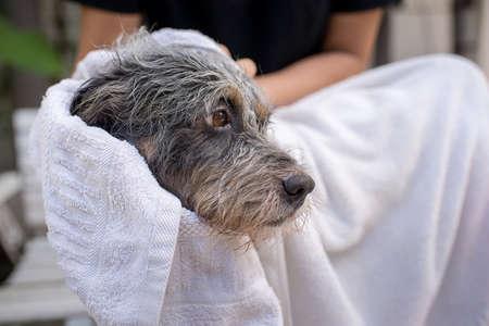 Cute dog at grooming salon