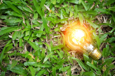 light bulb on grass with sunset power energy concept nature