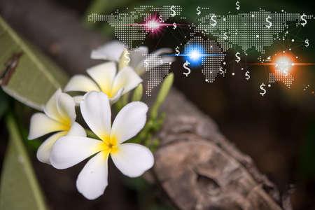 Flower Export Businesses Worldwide 免版税图像
