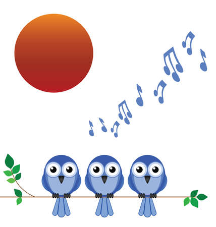 song bird: Morning dawn chorus of birdsong against a rising sun