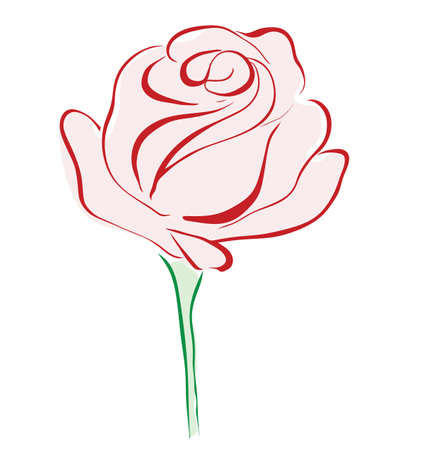 rose bush: Red rose flower isolated on white background Illustration