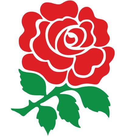 영국의 레드 로즈 국가의 상징 흰색 배경에 고립