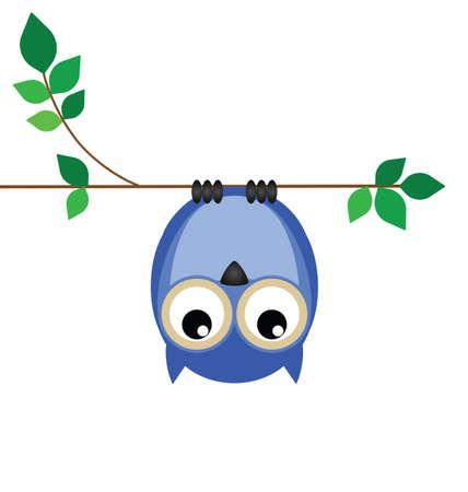 owlet: Boca abajo en una rama del b�ho mirando hacia abajo