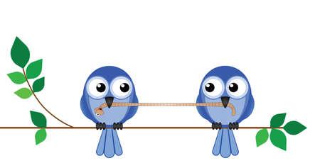 орнитология: Две птицы борются за червя на обед Иллюстрация