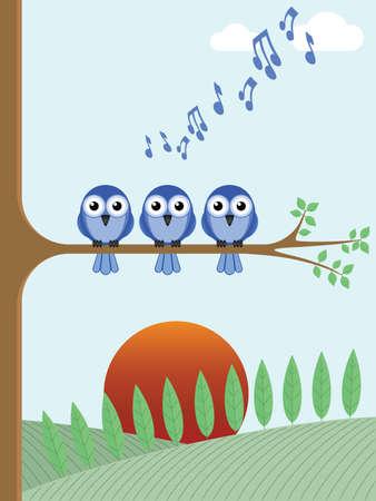 орнитология: Птица рассвета хорового пения, как солнце поднимается