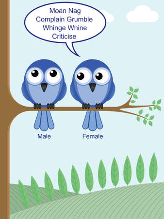Humorous look at how to determine the gender of birds Vector