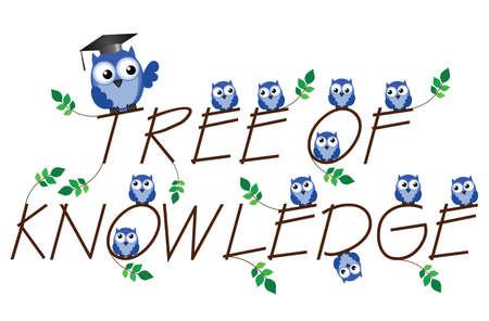 arbol de la sabiduria: �rbol del Conocimiento rama de texto sobre fondo blanco Vectores
