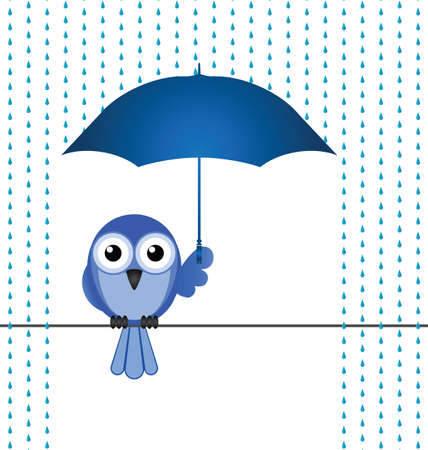 downpour: Bird sheltering from the rain isolated on white background Illustration