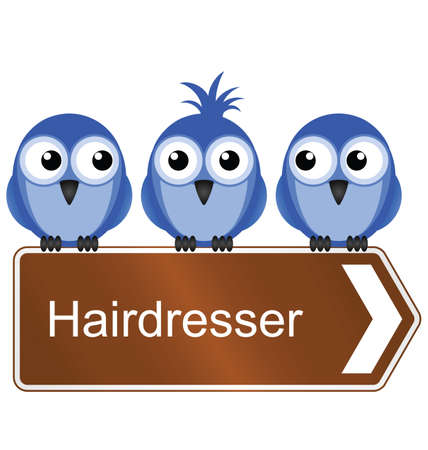 scruffy: Bird requiring the services of a hairdresser isolated on white background Illustration