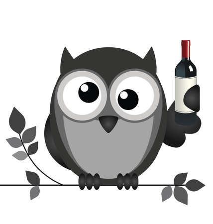 strigiformes: Drunken owl sat on a branch isolated on white background