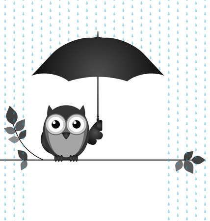 Owl sheltering from the rain sat on a branch isolated on white background Çizim
