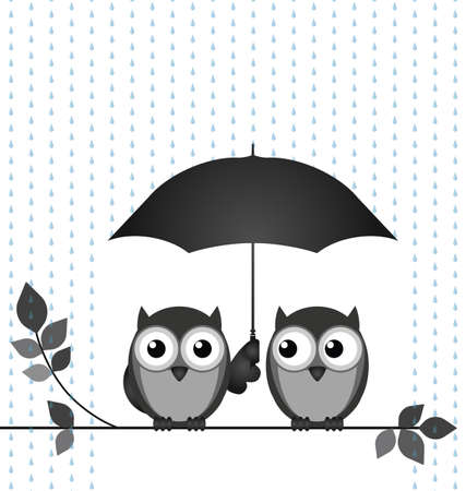 strigiformes: Two owls sheltering from the rain sat on a branch isolated on white background