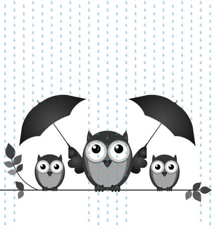 drizzle: Monochrome owl mother sheltering her young from the rain isolated on white background