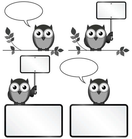 converse: Monochrome Eulen mit Kopie, Raum f�r eigenen Text oder Grafiken Zeichen isoliert auf wei�em Hintergrund