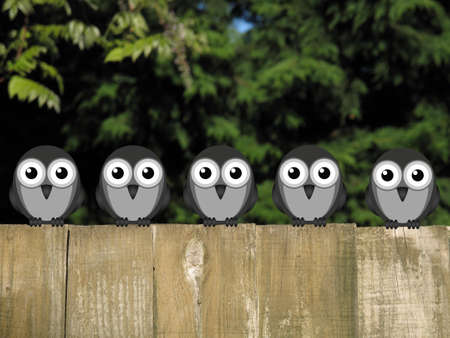 flock: Flock of comical birds perched on a timber garden fence against a foliage background