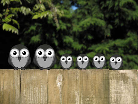 comical: Comical bird family perched on a timber garden fence against a foliage background