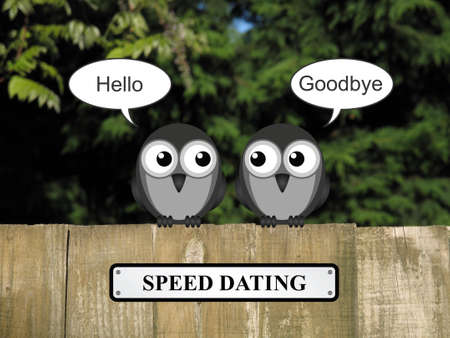 speed dating: Comical birds speed dating perched on a timber garden fence against a foliage background