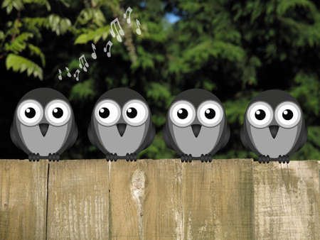 sunup: Comical bird dawn chorus perched on a timber garden fence against a foliage background
