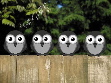 chorus: Comical bird dawn chorus perched on a timber garden fence against a foliage background