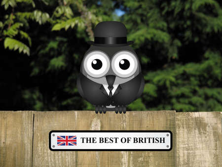 cymru: Comical British gentleman bird with The best Of British sign perched on a timber garden fence against a foliage background Stock Photo