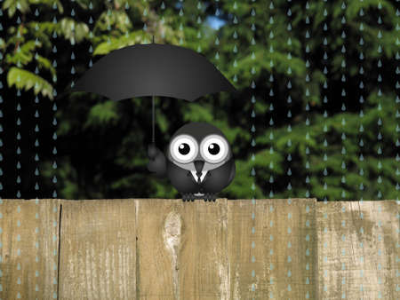 Comical bird sheltering from the rain with an umbrella perched on a timber garden fence against a foliage background Stock Photo