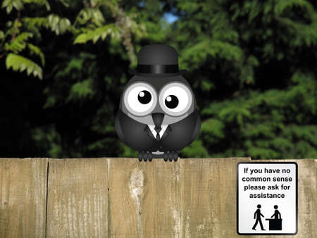 bewildered: Comical help desk sign for those with no common sense with bewildered bird perched on a timber garden fence against a foliage background