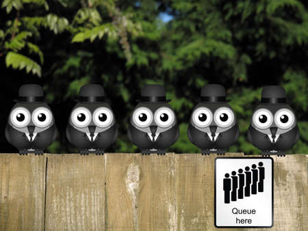 queuing: Comical queue here sign with queuing businessmen birds perched on a timber garden fence against a foliage background