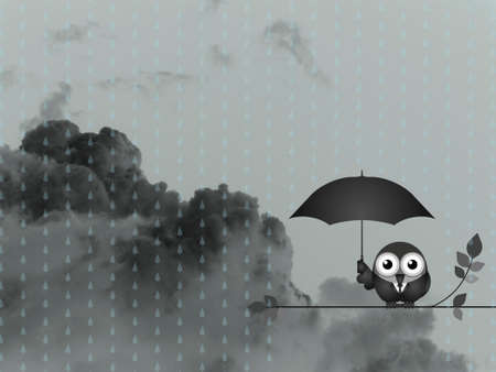 sheltering: Bird with umbrella sheltering from the rain against a dark cloudy skyscape Stock Photo