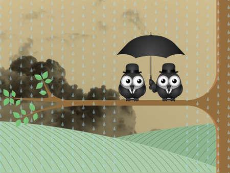 rainfall: Birds sheltering from the rain under an umbrella against a cloudy sky backdrop
