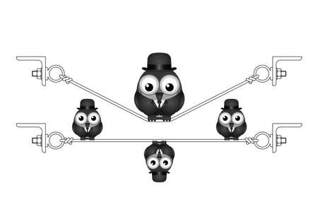 stocky: Fat overweight bird on a flexed steel wire isolated on white background