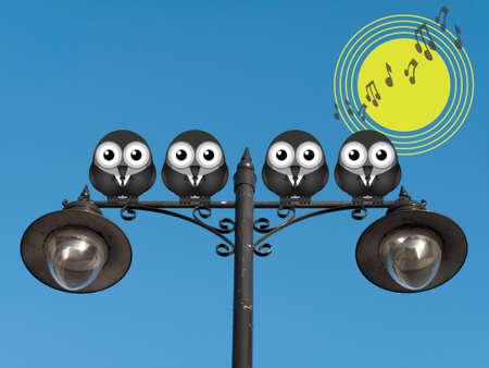 chorus: Comical bird boy band singing the dawn chorus perched on a lamppost against a clear blue sky