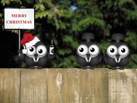 inebriated: Drunken bird reveller at the office party with Merry Christmas sign perched on a wooden fence Stock Photo