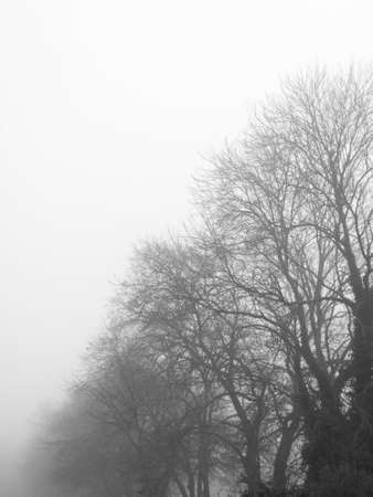 Monochrome rural trees taken early winter foggy morning