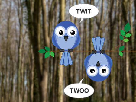 twit: Two owls calling to each other perched on a tree branch against a blurred woodland background