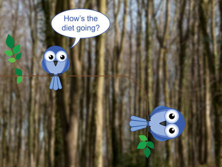 tubby: Fat bird on a diet perched on a tree branch against a blurred woodland background Stock Photo