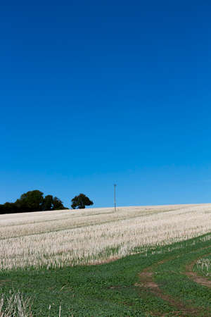Crop stubble after harvest left on farmland field in rural Hampshire set against a clear blue sky