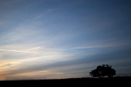 Silhouetted windswept stunted tree on farm grassland field in rural Hampshire at dawn