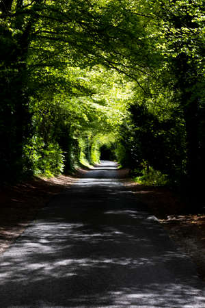 Shaded tree lined single track country lane in rural Hampshire Banco de Imagens - 122324356