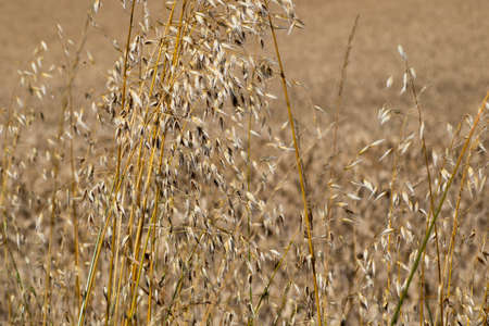 Grass seed growing on edge of farmland field with shallow depth of field Фото со стока