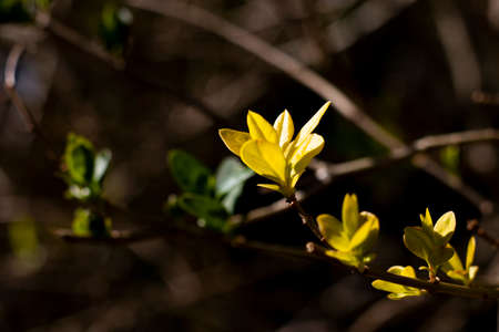 Springtime new leaf growth on tree with shallow depth of field