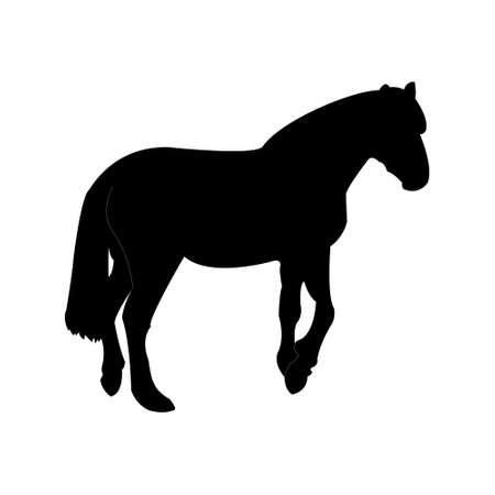 Silhouette of the horse. Template. Vector illustration 向量圖像