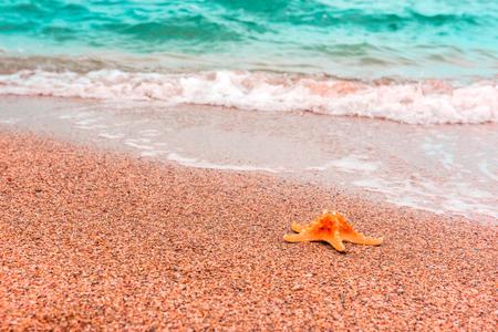 Starfish on coast. Summer background