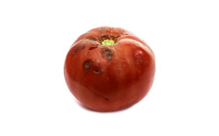 Rotten tomato  isolated on white background Stock Photo