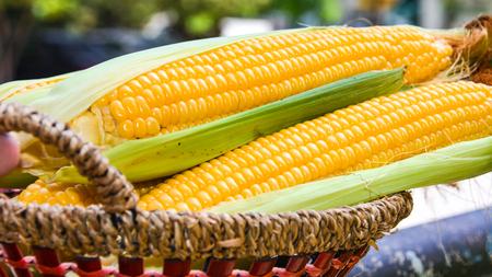 Corn cobs in wicker basket in garden