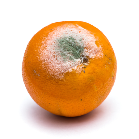 Rotten orange fruit on white background 스톡 콘텐츠