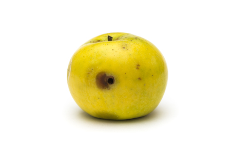 Wormy apple on white background