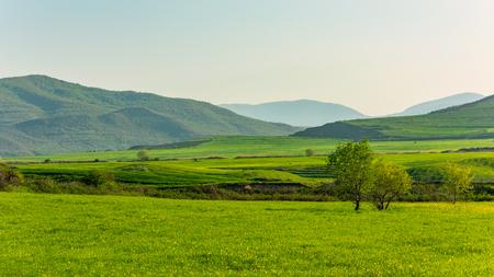 Lonely green tree on farm field Stock fotó