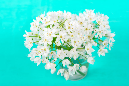 White spring flowers on a blue background