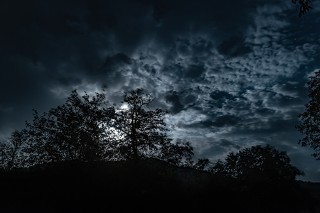 A cloudy night sky with moon light in the mysterious forest